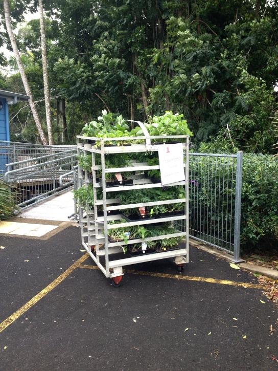 Vegie Seedling Fundraiser